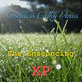The Ensconcing XP (Sampler)